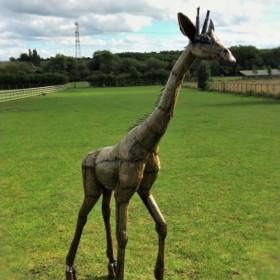 7ft Giraffe